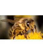 Vente en ligne miels du Jura et produits d'épicerie fine - Fromagerie Benoît